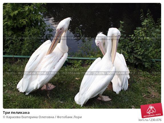Три пеликана, фото № 230076, снято 11 июля 2007 г. (c) Карасева Екатерина Олеговна / Фотобанк Лори