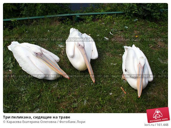 Три пеликана, сидящие на траве, фото № 161448, снято 11 июля 2007 г. (c) Карасева Екатерина Олеговна / Фотобанк Лори