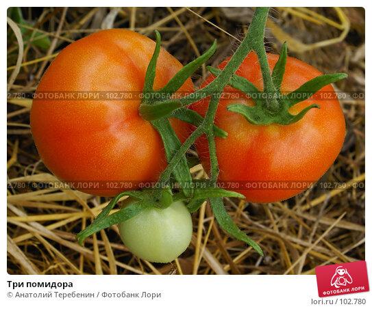Три помидора, фото № 102780, снято 27 февраля 2017 г. (c) Анатолий Теребенин / Фотобанк Лори