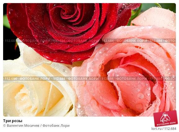 Три розы, фото № 112684, снято 10 февраля 2007 г. (c) Валентин Мосичев / Фотобанк Лори