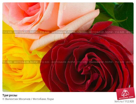 Три розы, фото № 112920, снято 16 февраля 2007 г. (c) Валентин Мосичев / Фотобанк Лори