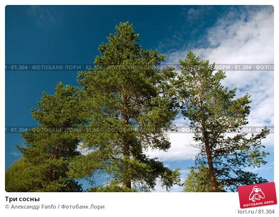 Купить «Три сосны», фото № 81304, снято 7 августа 2007 г. (c) Александр Fanfo / Фотобанк Лори