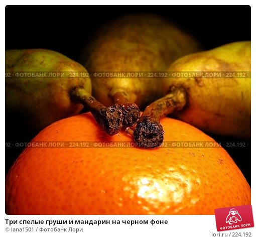 Три спелые груши и мандарин на черном фоне, эксклюзивное фото № 224192, снято 18 февраля 2008 г. (c) lana1501 / Фотобанк Лори