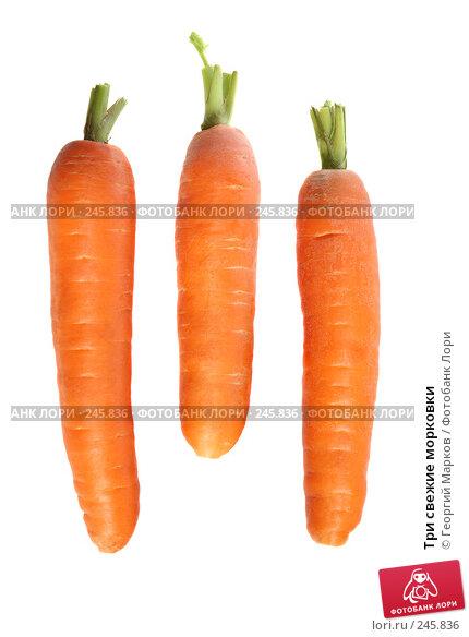 Три свежие морковки, фото № 245836, снято 16 октября 2007 г. (c) Георгий Марков / Фотобанк Лори