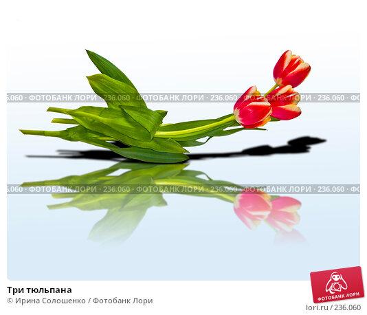 Купить «Три тюльпана», фото № 236060, снято 10 марта 2008 г. (c) Ирина Солошенко / Фотобанк Лори