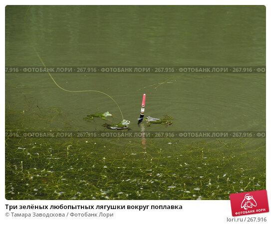 Три зелёных любопытных лягушки вокруг поплавка, эксклюзивное фото № 267916, снято 30 июня 2007 г. (c) Тамара Заводскова / Фотобанк Лори