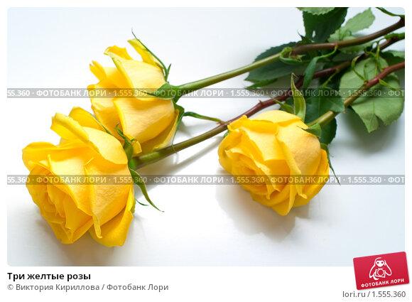 Красивые картинки розы