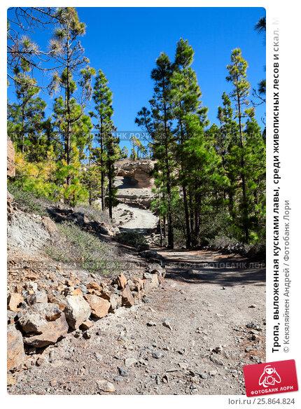 Купить «Тропа, выложенная кусками лавы, среди живописных лесов и скал. Маршрут к Лунному пейзажу. Тенерифе, Канарские острова. Испания», фото № 25864824, снято 30 декабря 2015 г. (c) Кекяляйнен Андрей / Фотобанк Лори
