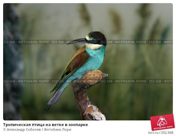Тропическая птица на ветке в зоопарке, фото № 252568, снято 13 августа 2005 г. (c) Александр Соболев / Фотобанк Лори