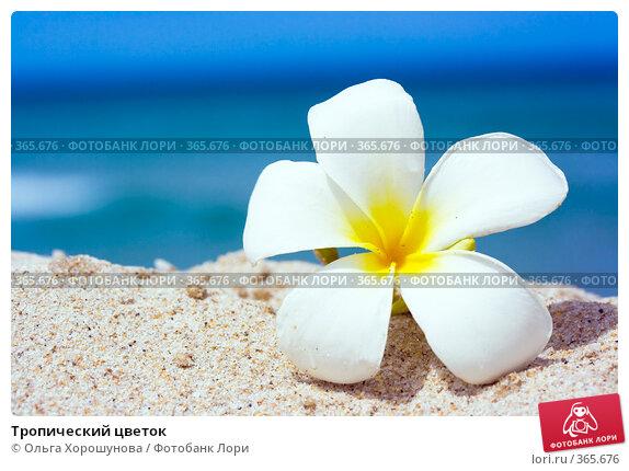 Купить «Тропический цветок», фото № 365676, снято 12 июня 2008 г. (c) Ольга Хорошунова / Фотобанк Лори