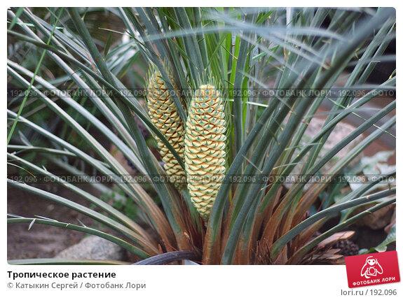 Тропическое растение, фото № 192096, снято 5 января 2008 г. (c) Катыкин Сергей / Фотобанк Лори