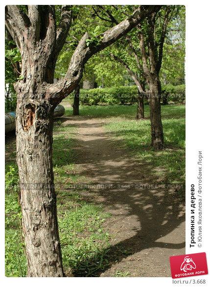 Тропинка и дерево, фото № 3668, снято 16 мая 2006 г. (c) Юлия Яковлева / Фотобанк Лори