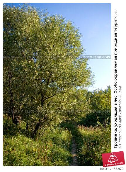 """Тропинка, уходящая в лес. Особо охраняемая природная территория """"Долина реки Сетунь"""", фото № 155972, снято 6 сентября 2007 г. (c) Петухов Геннадий / Фотобанк Лори"""