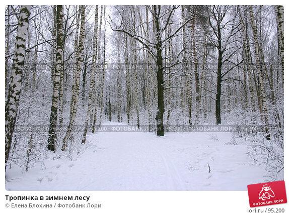 Тропинка в зимнем лесу, фото № 95200, снято 5 марта 2007 г. (c) Елена Блохина / Фотобанк Лори