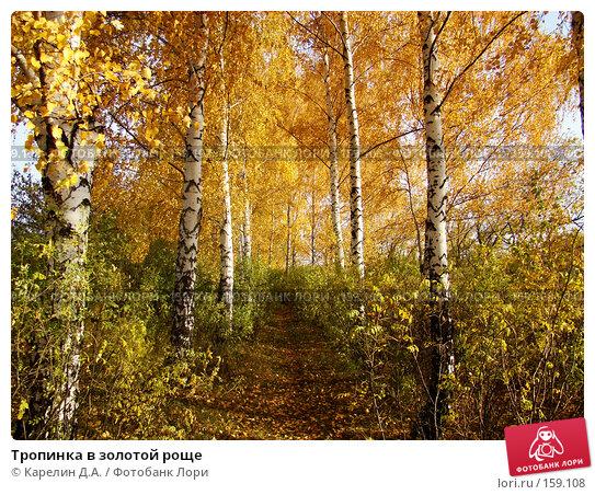 Купить «Тропинка в золотой роще», фото № 159108, снято 19 октября 2007 г. (c) Карелин Д.А. / Фотобанк Лори