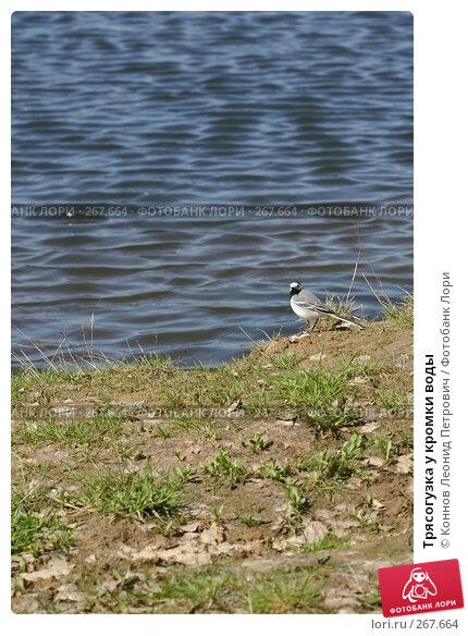Купить «Трясогузка у кромки воды», фото № 267664, снято 25 апреля 2008 г. (c) Коннов Леонид Петрович / Фотобанк Лори
