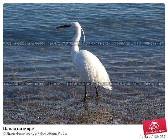 Купить «Цапля на море», фото № 189072, снято 16 января 2008 г. (c) Яков Филимонов / Фотобанк Лори