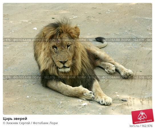 Царь зверей, фото № 162976, снято 10 июля 2007 г. (c) Хижняк Сергей / Фотобанк Лори