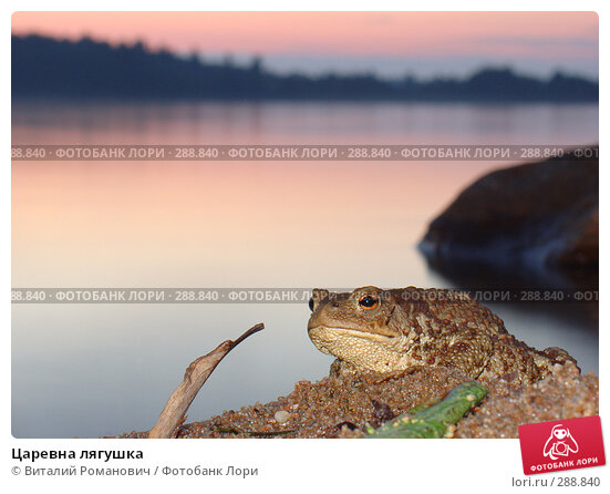 Царевна лягушка, фото № 288840, снято 20 июля 2005 г. (c) Виталий Романович / Фотобанк Лори