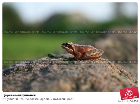 Купить «Царевна-лягушонок», фото № 106656, снято 11 августа 2007 г. (c) Чумилин Леонид Александрович / Фотобанк Лори