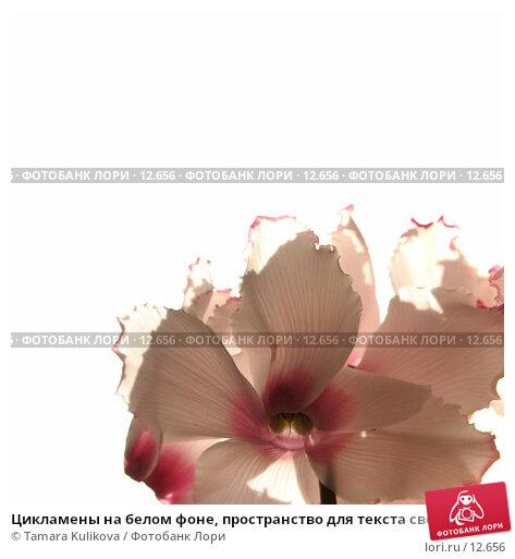 Цикламены на белом фоне, пространство для текста сверху, фото № 12656, снято 9 ноября 2006 г. (c) Tamara Kulikova / Фотобанк Лори