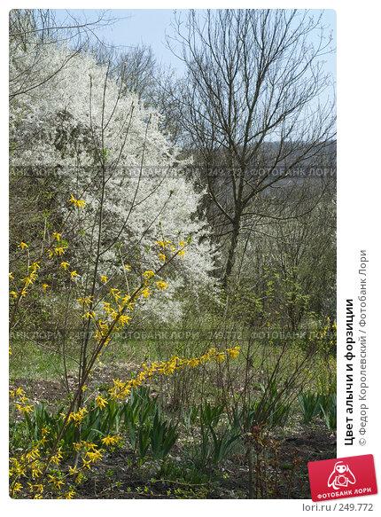 Цвет алычи и форзиции, фото № 249772, снято 12 апреля 2008 г. (c) Федор Королевский / Фотобанк Лори