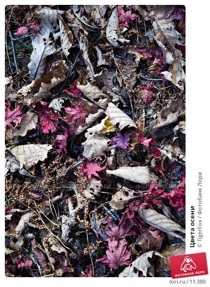 Цвета осени , фото № 11380, снято 21 октября 2006 г. (c) TigerFox / Фотобанк Лори