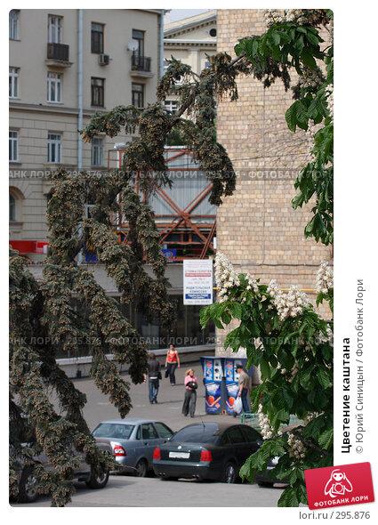 Купить «Цветение каштана», фото № 295876, снято 20 мая 2008 г. (c) Юрий Синицын / Фотобанк Лори