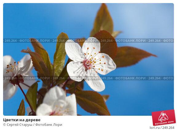 Цветки на дереве, фото № 249264, снято 5 апреля 2008 г. (c) Сергей Старуш / Фотобанк Лори
