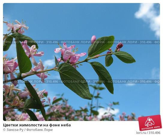 Купить «Цветки жимолости на фоне неба», фото № 310496, снято 31 мая 2008 г. (c) Заноза-Ру / Фотобанк Лори