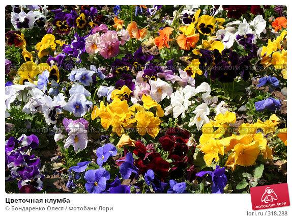 Цветочная клумба, фото № 318288, снято 10 июня 2008 г. (c) Бондаренко Олеся / Фотобанк Лори