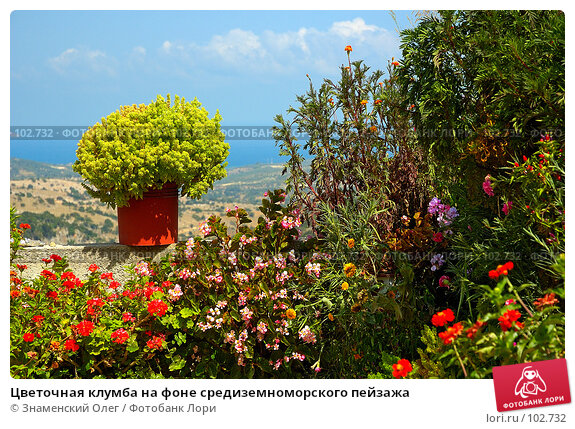 Цветочная клумба на фоне средиземноморского пейзажа, фото № 102732, снято 23 февраля 2017 г. (c) Знаменский Олег / Фотобанк Лори