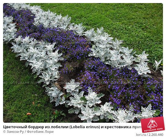 Особенности выращивания роз в Воронеже и Воронежской