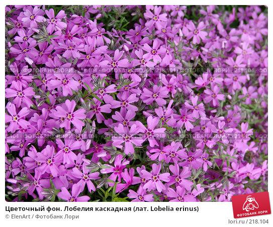 Купить «Цветочный фон. Лобелия каскадная (лат. Lobelia erinus)», фото № 218104, снято 27 апреля 2018 г. (c) ElenArt / Фотобанк Лори