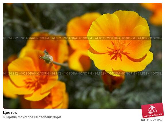 Цветок, эксклюзивное фото № 24852, снято 23 июля 2006 г. (c) Ирина Мойсеева / Фотобанк Лори