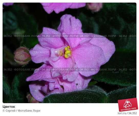 Купить «Цветок», фото № 34352, снято 26 февраля 2007 г. (c) Сергей / Фотобанк Лори