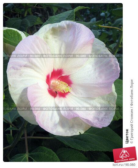 Цветок, фото № 90080, снято 29 сентября 2007 г. (c) Григорий Стоякин / Фотобанк Лори