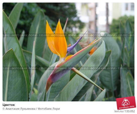 Цветок, фото № 133052, снято 29 августа 2005 г. (c) Анастасия Лукьянова / Фотобанк Лори