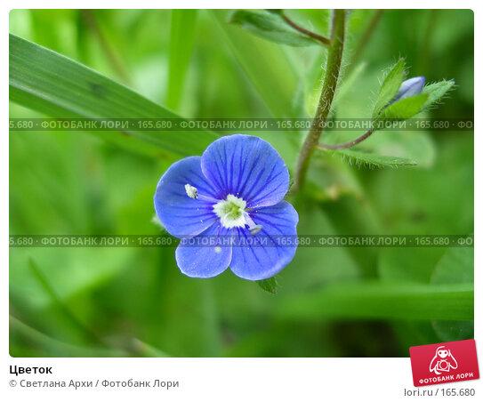 Цветок, фото № 165680, снято 16 мая 2005 г. (c) Светлана Архи / Фотобанк Лори