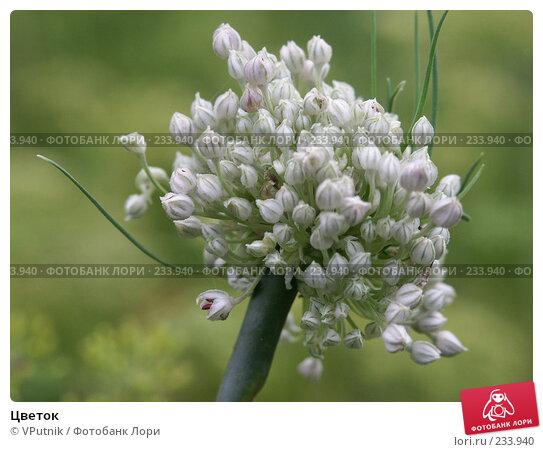 Цветок, фото № 233940, снято 22 августа 2004 г. (c) VPutnik / Фотобанк Лори
