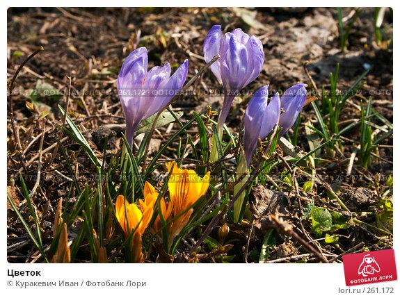 Цветок, фото № 261172, снято 31 марта 2008 г. (c) Куракевич Иван / Фотобанк Лори