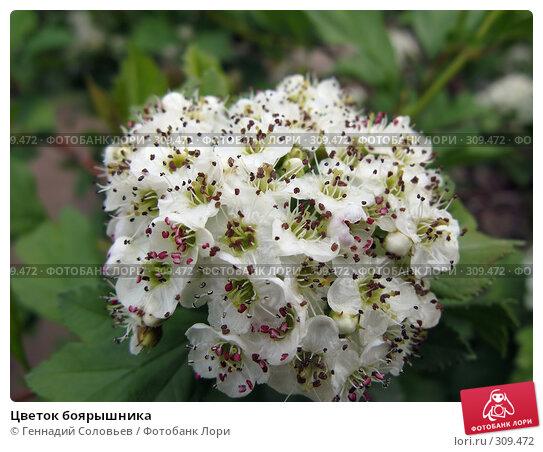 Цветок боярышника, фото № 309472, снято 3 июня 2008 г. (c) Геннадий Соловьев / Фотобанк Лори