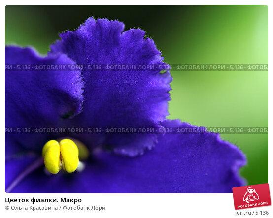 Цветок фиалки. Макро, фото № 5136, снято 16 июня 2006 г. (c) Ольга Красавина / Фотобанк Лори