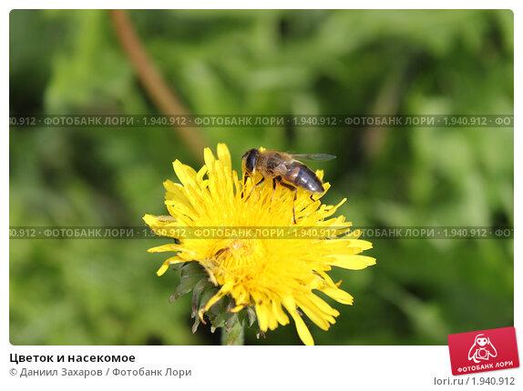 Цветок и насекомое. Стоковое фото, фотограф Даниил Захаров / Фотобанк Лори