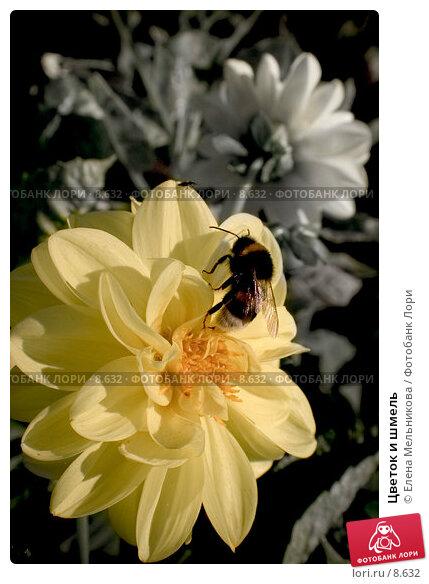Цветок и шмель, фото № 8632, снято 28 мая 2017 г. (c) Елена Мельникова / Фотобанк Лори