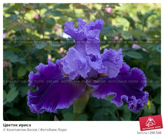 Купить «Цветок ириса», фото № 298548, снято 21 апреля 2018 г. (c) Константин Босов / Фотобанк Лори