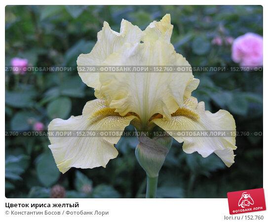 Цветок ириса желтый, фото № 152760, снято 22 мая 2007 г. (c) Константин Босов / Фотобанк Лори