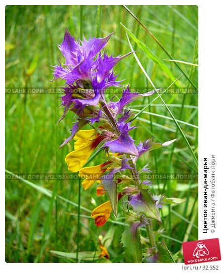 Купить «Цветок иван-да-марья», фото № 92352, снято 16 июня 2007 г. (c) Дживита / Фотобанк Лори