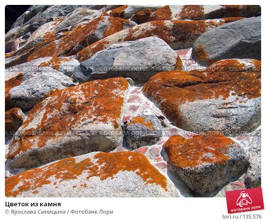Цветок из камня, фото № 135576, снято 16 августа 2007 г. (c) Ярослава Синицына / Фотобанк Лори