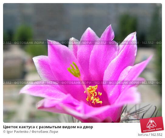 Цветок кактуса с размытым видом на двор, фото № 162552, снято 10 июня 2006 г. (c) Igor Pavlenko / Фотобанк Лори